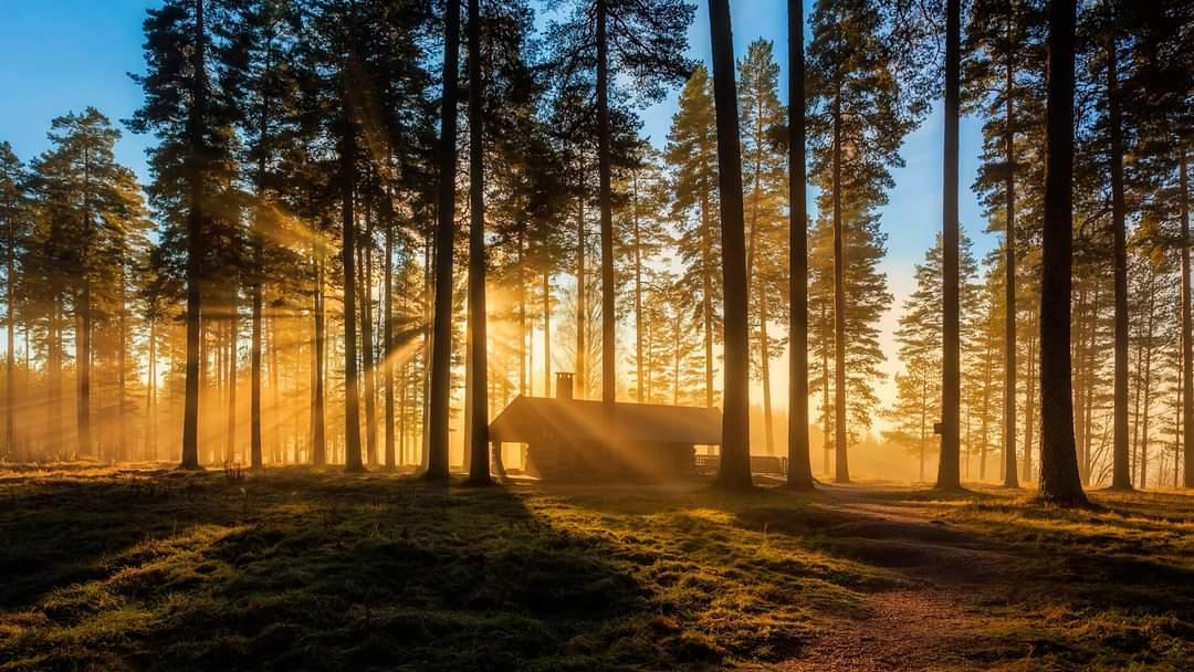 Asocijacija prirodne i šumske medicine – Forest